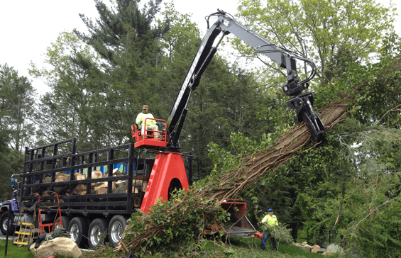 tree removal machine