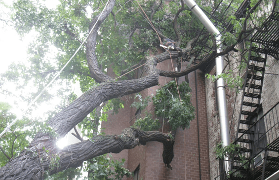 tree branch cutting in queens