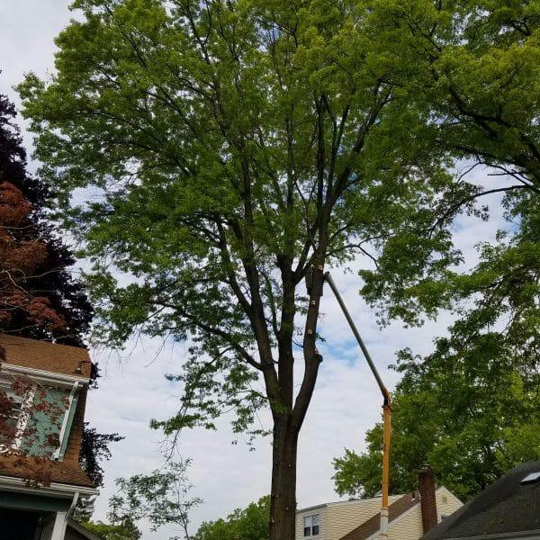 queens tree trimmer