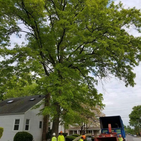 tree branch cutting