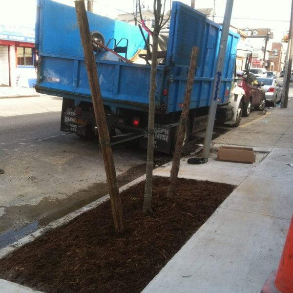 tree planting in queens