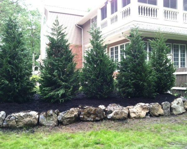 commercial shrub landscaping