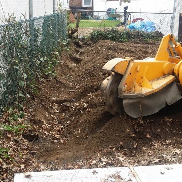 stump removal in queens