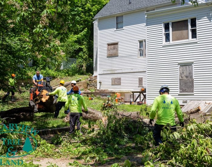 land clearing workers in queens ny