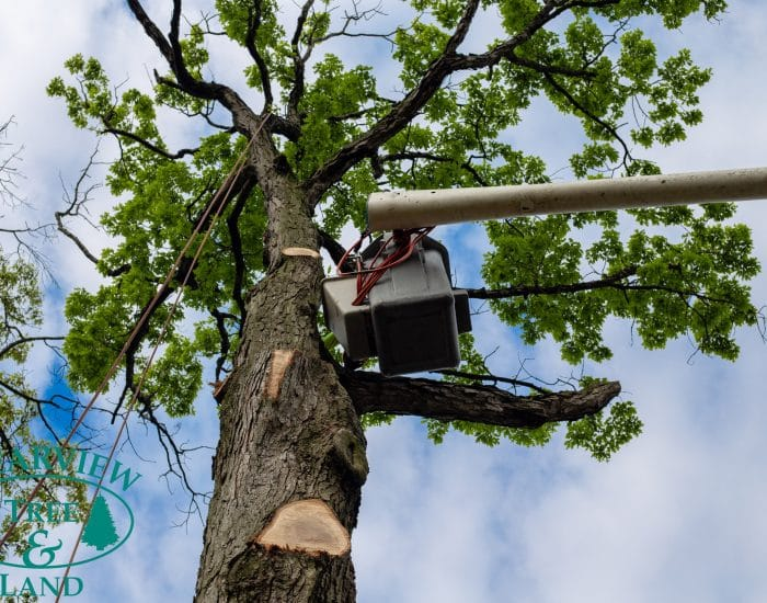 queens tree trimming specialist