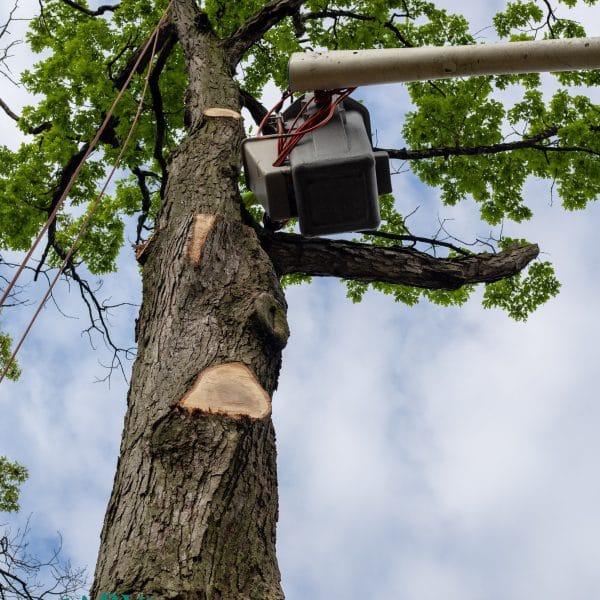 queens tree pruning specialist