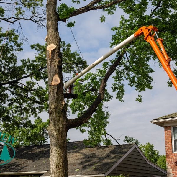 tree removal from a bucket truck in queens ny