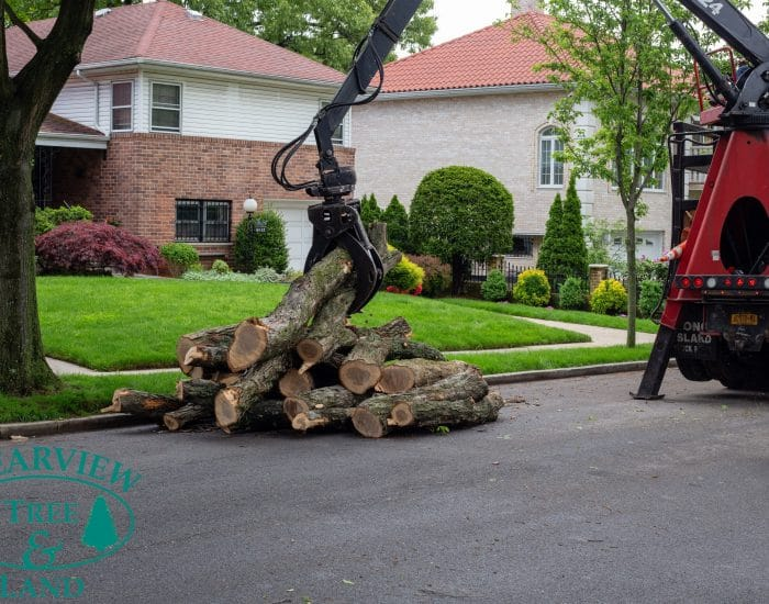 tree log picked up by machine